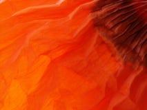 Detalhe vermelho #2 da folha da papoila Imagens de Stock