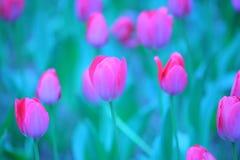 Detalhes cor-de-rosa da tulipa imagem de stock