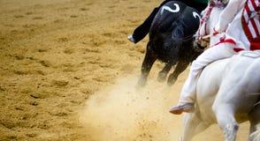 Detalhes da corrida de cavalos de Asti dos di de Palio de pés de galope dos cavalos no hipódromo Imagens de Stock
