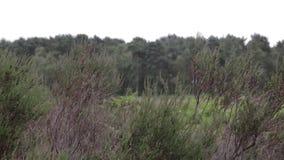 Detalhes da floresta da perseguição de Cannock, Reino Unido filme
