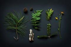 Detalhes da natureza - a casca de árvore, os cones, a flor do cravo-de-defunto de pântano, os ramos de pinheiro e a samambaia fol Imagem de Stock Royalty Free