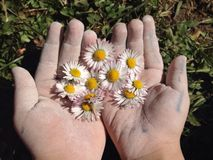 detalhes da natureza com mãos das crianças Imagens de Stock Royalty Free