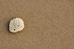 Detalhes da rocha do beira-mar de Tempurung Imagem de Stock