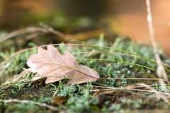 Detalhes das madeiras do outono Fotos de Stock Royalty Free