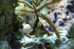Detalhes de coral e de peixes Foto de Stock Royalty Free