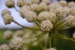 Detalhes de flor Imagem de Stock Royalty Free