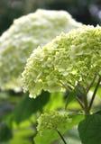 Detalhes de flor bonita Fotos de Stock