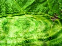 Detalhes de folha verde Fotos de Stock Royalty Free