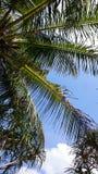 Detalhes de Palmtree no céu Fotografia de Stock Royalty Free