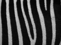 Detalhes de zebra Imagens de Stock