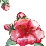 Detalhes do close-up da flor da peônia da ilustração ilustração stock