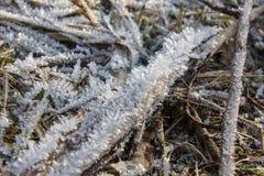 detalhes do inverno Fotos de Stock Royalty Free