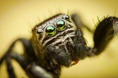 Detalhes do olho da aranha Imagem de Stock Royalty Free