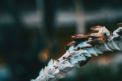 Detalhes uma flor branca e seca imagem de stock