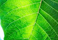 Detalhes verdes Imagens de Stock