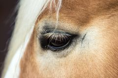 Detalj av ögat av ung halfing fotografering för bildbyråer