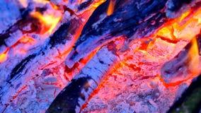 Detalj av blå brand av brinnande ädelträ Brinnande trän i varm luft för darrning Små flammor av den destillerat dansen och fluore stock video
