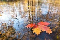 Detalj av bladet i hösten arkivbilder