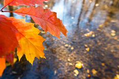 Detalj av bladet i hösten arkivfoto