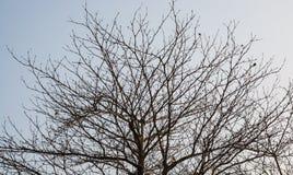 Detalj av bruna trädfilialer Royaltyfria Bilder