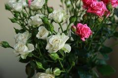 Detalj av buketten av vita och rosa rosor Arkivbild