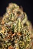 Detalj av cannabisknoppen Royaltyfria Bilder
