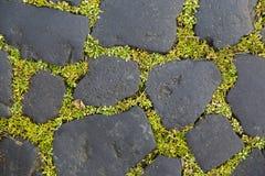 Detalj av coble stenar Fotografering för Bildbyråer