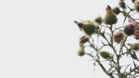 Detalj av den afrikanska busken stock video