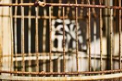 Detalj av den avRusty fågelburen Royaltyfri Foto