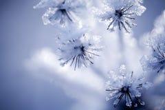 Detalj av den djupfryst blomman Arkivbilder