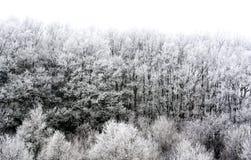 Detalj av den djupfrysta skogen royaltyfria bilder