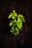 Detalj av den enkla kvisten av den gröna örten Royaltyfri Bild
