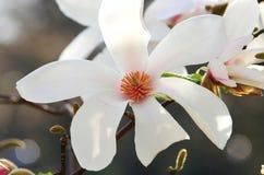 Detalj av den vita blomman Fotografering för Bildbyråer