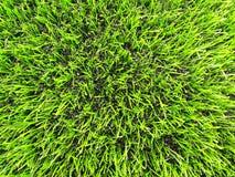 Detalj av det plast- gräsfältet på fotbolllekplats Detalj av ett kors av målade vita linjer i ett fotbollfält konstgjort gräs Royaltyfria Bilder