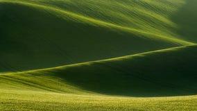 Detalj av det södra Moravian fältet, Tjeckien royaltyfria bilder