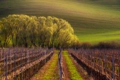 Detalj av det södra Moravian fältet, Tjeckien royaltyfria foton