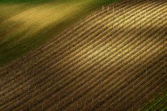 Detalj av det södra Moravian fältet, Tjeckien arkivbilder