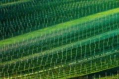 Detalj av det södra Moravian fältet, Tjeckien royaltyfri foto