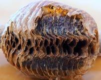 Detalj av det skadade gamla Wasp redet royaltyfri bild