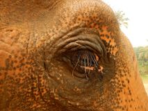 Detalj av elefantögat i Thailand Arkivfoto