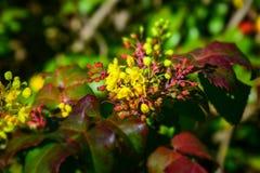detalj av en blommablomning Royaltyfri Foto