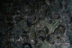Detalj av en bränd ned vägg Royaltyfria Bilder