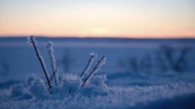 Detalj av en djupfryst filial i en polar solnedgång royaltyfri bild