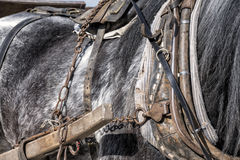 Detalj av en funktionsduglig häst arkivbilder