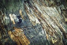 Detalj av en gammal möglig trädstubbe Arkivbild