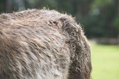 Detalj av en gammal sjuk ponny royaltyfri bild