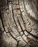 Detalj av en gammal stubbe med sprickor Royaltyfria Bilder