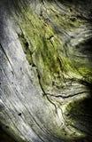 Detalj av en gammal stubbe som är bevuxen med mossa Royaltyfri Foto