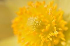 Detalj av en gul blomma Arkivbild