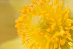 Detalj av en gul blomma Royaltyfri Fotografi